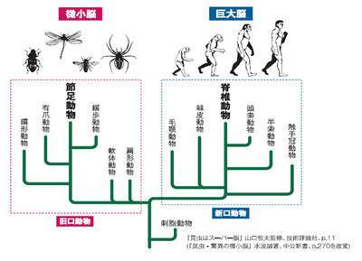 図1 動物の系統と脳の関係