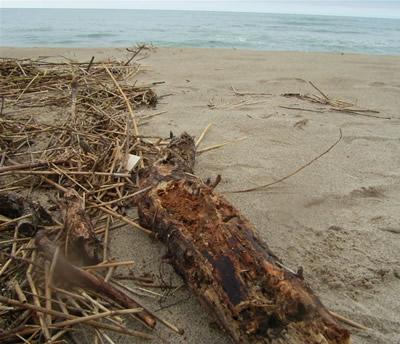 1本の大きな朽ち木