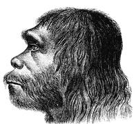 ネアンデルタール人の復元図。20世紀前半まではこのような姿が推測されていた