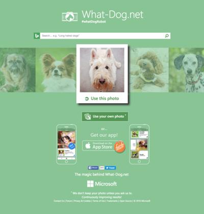 図6 犬種を調べたり写真と似た犬を探せるサービス