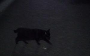 前を横切る黒い物体