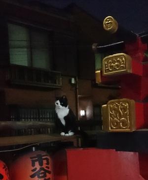夜の神社のねこ1