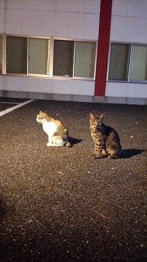 駐車場の仲良しねこーず