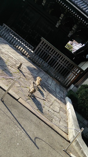 京都のねこーず