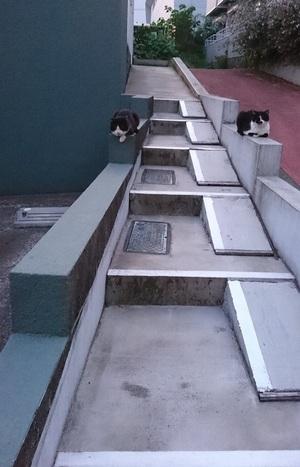 アパートの階段のお座りねこ