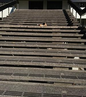 本堂に続く階段の真ん中で
