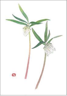 越の小貝母(コシノコバイモ) 画:外山康雄