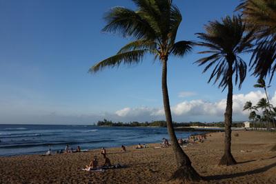 行ったのはここ,ハレイワのアリイビーチ。多いときだと5~6匹ゴロゴロと砂浜に上がっていることもあるのだとか。もっと活発に動いてるやつ見たかったなあ。