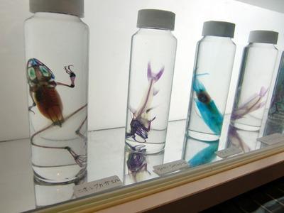 独特の雰囲気を醸し出す「透明標本」。「たんぱく質を酵素により透明にし硬骨を赤紫,軟骨を青色に染色をする」という骨格研究の手法として確立された形態。