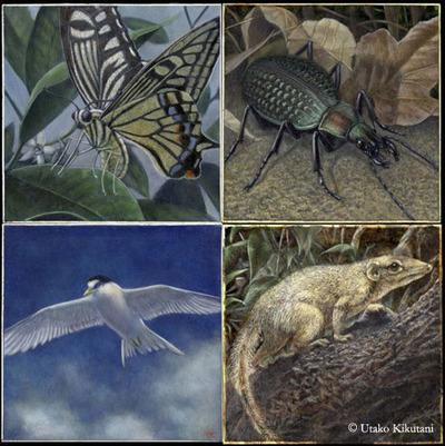 アフリカでの日々は,さまざまな生き物を描く上でとても役に立っているとのこと