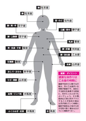 図 『体の図解表』