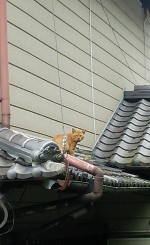 瓦屋根のねこ