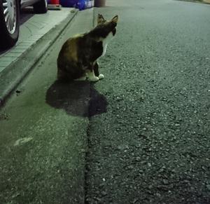 道路にいた三毛ねこ